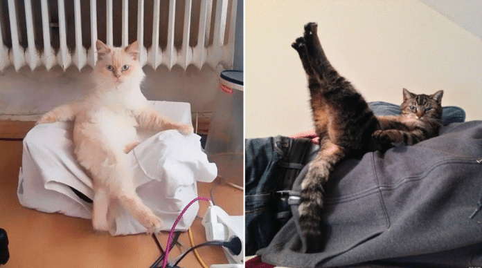 cats-posing-funny