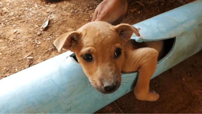 dyr-som-blir-reddet