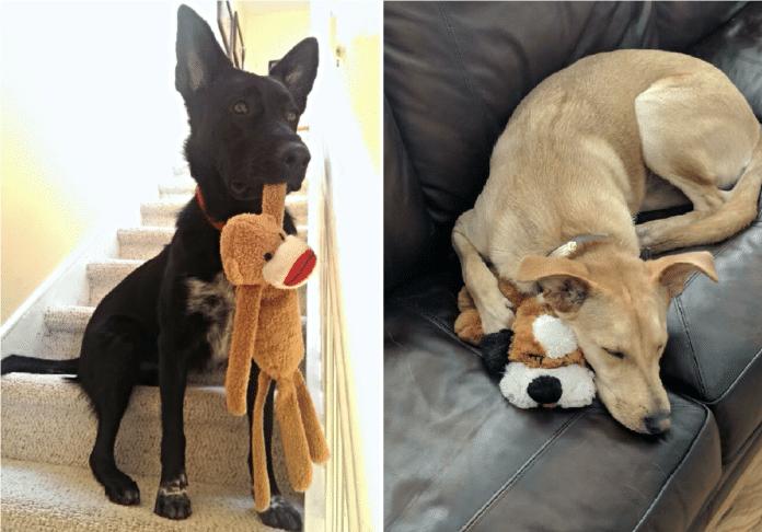 leker-til-hunder