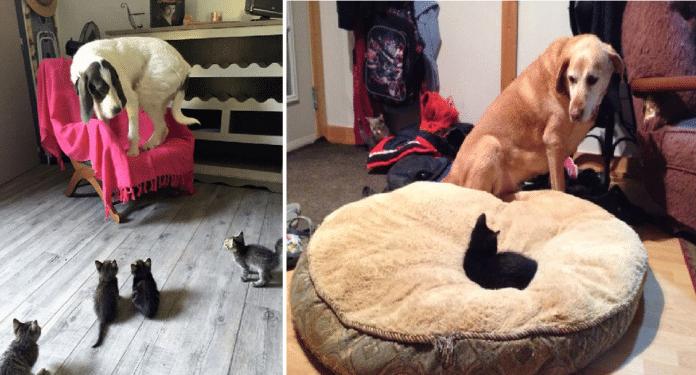 katter-og-hunder-sammen