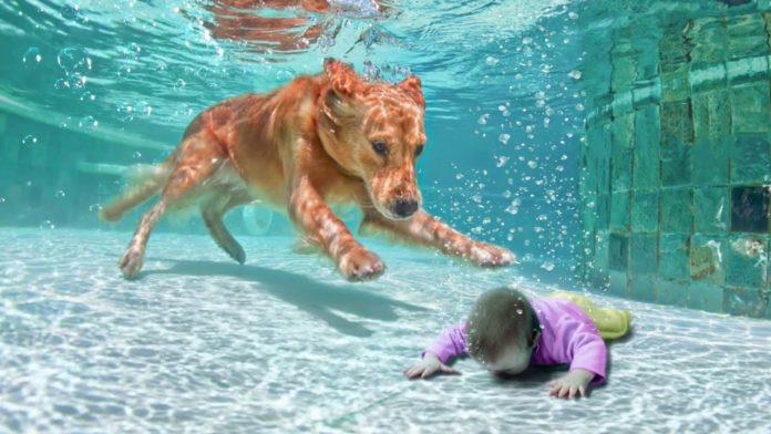 dyr-som-redder-mennesker