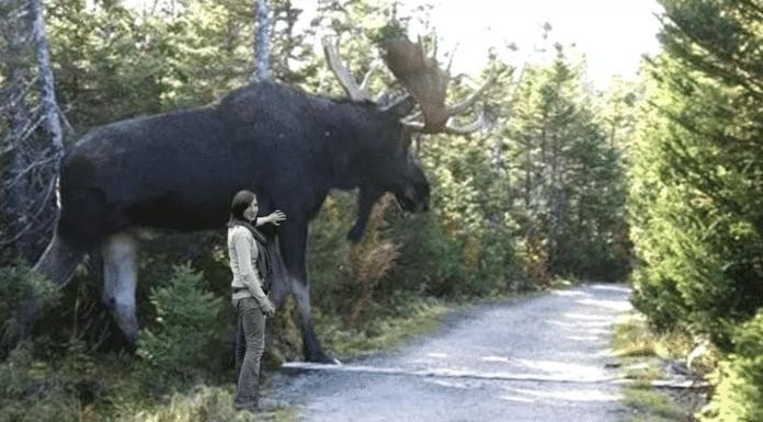 verdens-største-dyr