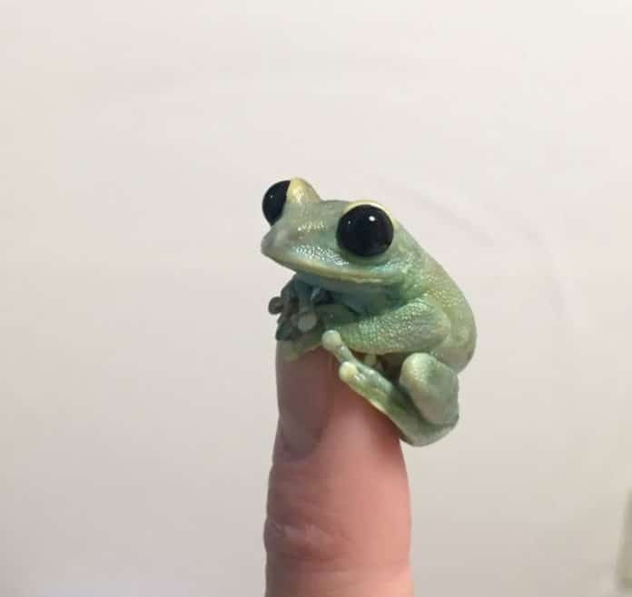 cute-tiny-finger-animals-112-612dced71d8e9__700